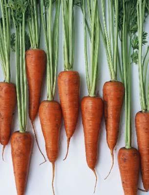 生吃胡萝卜不吸收
